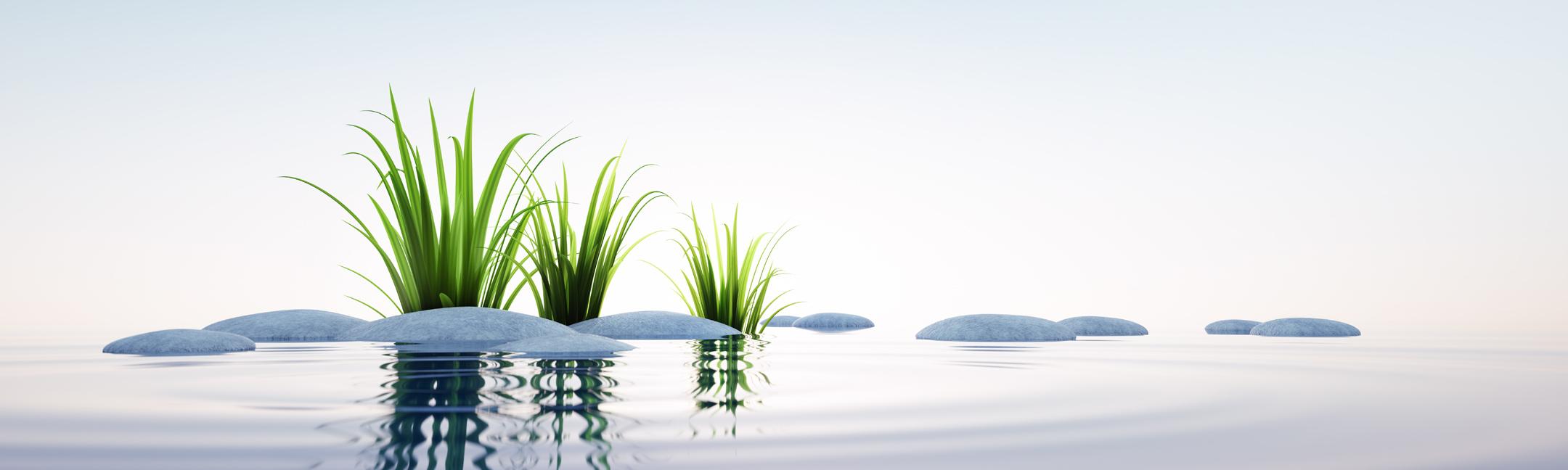Pflanzen, die sich im Wasser spiegeln